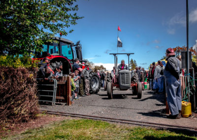 Ferguson tractors from the 2016 muster
