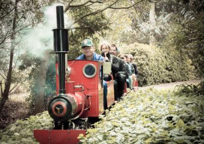 Mini steam train